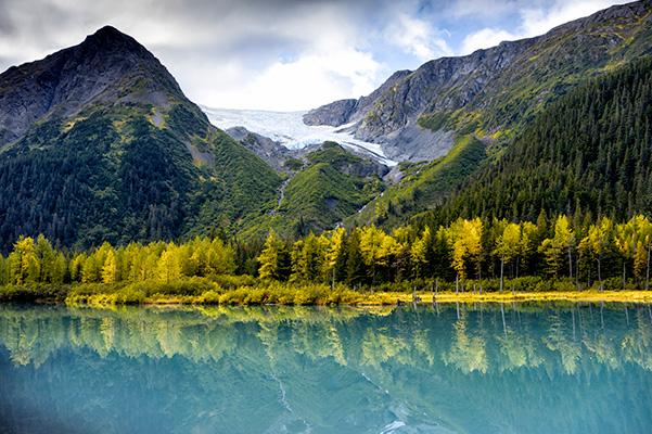 AlaskaWildBerry-Park